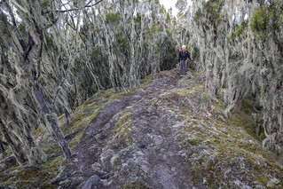 Moss-draped trees