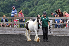 Gabriel in Hand (meniscuslens) Tags: rescue pony skewbald groom arena fence show horses hounds heroes horse trust charity high wycombe aylesbury princes risborough buckinghamshire
