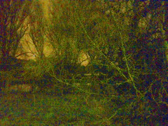 Swamp Land (spratpics) Tags: uk gb england swamp swampland teesside britain spooky floodplain trees photographybypaulwalker