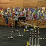 Cooper at Agility Training thumbnail