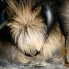 Bee on Granite (Ultra-Macro) (Marcello Velasco) Tags: macrophotographer macrophotography insect macrophotograph bee macro
