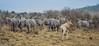 Masai Mara, Kenya (Yee-Kay Fung) Tags: animals safari kenya masaimara zebras