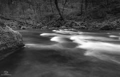 Rapids on the river Lyne.. (CamraMan.) Tags: mono blackandwhite riverlyne nature river trees canon6d canon1740mmlusm longexposure longtown shankwood ©camraman ©davidliddle cumbria