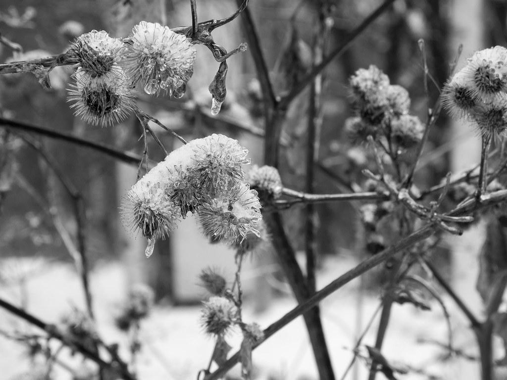 фото: Зимнее #2