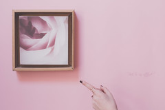 Pink is an attitiude (pierfrancescacasadio) Tags: aprile2018 50mm lifeisarainbow rose 52anonimos 22042018840a6413 pink tonki soft pastelcolor