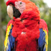 Honduras-0517 - Pretty Bird........