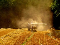 Francheville, France (Nepo Goldman-Piculell) Tags: francheville france scenic picturesque crops farming harvest harvester agriculture light summer