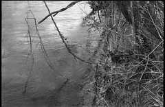 looking down, riverside, wire fence, French Broad River, Carrier Park, Asheville, NC, Kodak Retina IIIc, Arista.Edu 200, Ilford Ilfosol 3, 3.8.18 (steve aimone) Tags: riverside lookingdown branches wirefence frenchbroadriver carrierpark asheville northcarolina urbanpark kodak kodakretinaiiic retina aristaedu200 ilfordilfosol3developer 35mm film rangefinder blackandwhite monochrome monochromatic