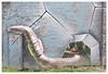 Glasgow Murals - Fellow Glasgow Residents (theimagebusiness) Tags: theimagebusiness theimagebusinesscouk travel tourism touristattraction visitscotland glasgow art mural street streetart accessibleart freeart streetmurals installations artists creative d810 fun nikon outdoors outdoor outside photographersinscotland scotland uk urban