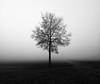 Lonely soul of a lonely tree (Robyn Hooz (away)) Tags: nebbia albero blackandwhite monochrome tronco trunk flat fog piatto sigh thoughtful pensieroso malinconico ricordi padova