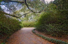 Winding garden path at Bellingrath Gardens in Theodore Alabama (CarmenSisson) Tags: alabama bellingrathgardens gulfcoast theodore flowers gardens outside tourism touristattractions path road walkway trail nature winding trees leaves foliage usa