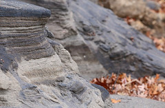 Sand Stratigraphy (peterkelly) Tags: digital northamerica canon 6d wheatley ontario lakeerie greatlakes shore fall leaves sand beach stratigraphy
