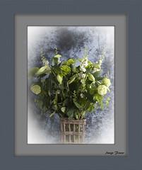 White Flowers (Only photoshoot, don't be afraid) Tags: bloemen macroopname planten flowers