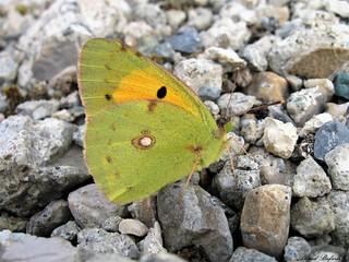 Butterfly 1638
