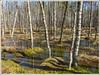20180412_8627_Wetland (Enn Raav) Tags: wetland kellissaare soo water vesi spring kevad loodus nature estonia eesti