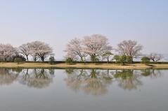 Kyoto - Empty Back (tcchang0825) Tags: japan kyoto sakura cherryblossom garden shugakuin lake