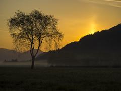 P4220023 (turbok) Tags: bäume ennstal irdningdonnersbachtal landschaft nebel pflanze sonnenaufgang stimmungen wildpflanzen c kurt krimberger