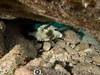 Trunkfish (R. Donald Winship Photography) Tags: aquaticlife cozumel divingunderwater scubaclubcozumelhousereef spottedtrunkfish