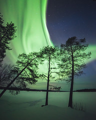 Wall of green (Nippe16) Tags: aurora northern lights revontulet suomi maisema landscape trees nature outdoor