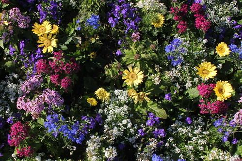 Many beautiful colours, Flower & Garden Festival
