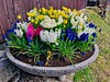 Planter with spring flowers in Kiefersfelden, Bavaria, Germany (UweBKK (α 77 on )) Tags: planter spring flowers blossoms earth flora bloom kiefersfelden bavaria bayern germany deutschland europe europa iphone