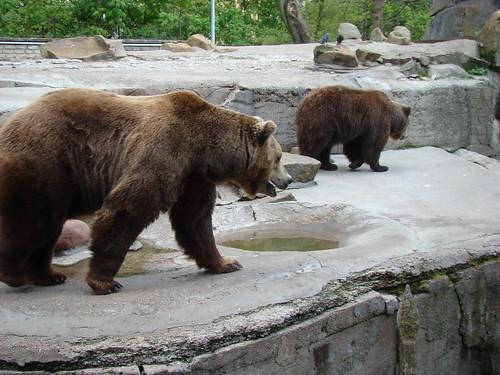 Медведи в Калининградском зоопарке ©  ayampolsky