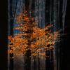 Light in the dark (SM_WZ) Tags: germany hessen ronneburg sonnenuntergang baum blauerhimmel bluesky bäume forest fruehling frühling landscape natur nature nopeople spring sun tree wald winter wood woodland