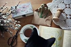 Good Friday (Ralaphotography) Tags: spring cat kitten easter good friday home vintage nostalgic books coffee tea march season frühling ostern karfreitag black daffodils snow drops ramona mahrla