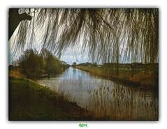 CANAL DE FURNES (régisa) Tags: canal furnes zuydcoote ghyvelde arbre tree