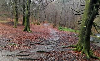 Winter Woodland Wander
