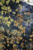 残花 (florian.turgeon) Tags: hokkaido japan film canon ae1 superia 400 roadtrip travel leaves twigs nature outdoor mountain autumn season