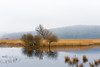 Leighton Moss (Ian Livesey) Tags: 20180308 landscape leighton places leightonmoss rspb lancashire silverdale tree england water