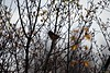 Back Yard_2018_04_07_(9) (Juergen__S) Tags: yard backyard nature flower closeup belgium mons tree bird