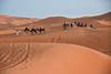 Caravan (meg21210) Tags: caravan camels desert morocco erfoud dromedaire dromedary dunes tuareg sahara sand people animals ridingcamels