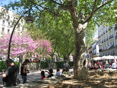 Plaza de Tirso de Molina, Madrid (d.kevan) Tags: trees plants flowers people benches squaresandroundabouts madrid plazadetirsodemolina spain sunumbrellas tables chairs terraces streetlamps buildings blossoms floweringtrees