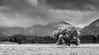 One Tree and a Hill (Nikhil Ramnarine) Tags: newzealand southisland hokitika hokitikagorge field meadow lonetree mountian clouds travel nikon d500 blackwhite blackwhitephotos monochrome