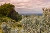 Cape Paterson, Victoria, Australia (martine_vise) Tags: landscape landscapephotography sky cloudysky clouds dune greenery shrubs sea capepaterson victoria australia ilovenature naturelover nature travel travelinaustralia sealife walk hiking beautifulview summerday beachlife waves