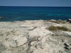 2017-11-26 11.49.21 (whiteknuckled) Tags: isla mujeres wedding alexis margaret trip vacation mexico rachel steve