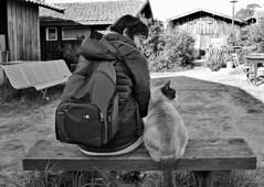 Regarder dans la même direction (Thierry.Vaye) Tags: anniversaire birthday nadia cat chat monochrome