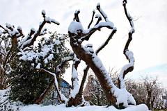 Photos Marco BP (38)_GF (marcbihanpoudec) Tags: bretagne neige plabennec plan deau lac banc arbres