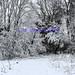 snow18-2