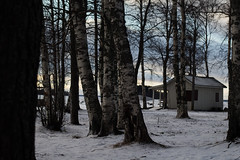 IMG_6221 (vivienhooper) Tags: winter finland joensuu lake shore trees landscape