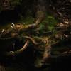 deep in the forest (B. Blue) Tags: moos wasserfallgolling baum österreich salzburg material holz wald natur pflanzen austria moss nature tree wood waterfallgolling gollingandersalzach at