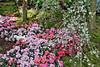 Sakura Matsuri (chooyutshing) Tags: sakuramatsuri floraldisplay flowerdome gardensbythebay baysouth marinabay singapore