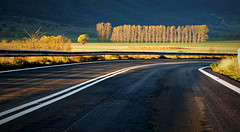 7.30 in the morning (jimiliop) Tags: road trees nature morning dusk light countryside lines curve wet landscape