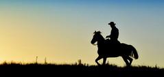 Sentencias (Eduardo Amorim) Tags: gaúcho gaúchos gaucho gauchos cavalos caballos horses chevaux cavalli pferde caballo horse cheval cavallo pferd cavalo cavall 馬 حصان 马 лошадь crioulo criollo crioulos criollos cavalocrioulo cavaloscrioulos caballocriollo caballoscriollos pôrdosol poente entardecer poniente atardecer sunset tramonto sonnenuntergang coucherdesoleil crepúsculo anoitecer pelotas costadoce riograndedosul brésil brasil sudamérica südamerika suramérica américadosul southamerica amériquedusud americameridionale américadelsur americadelsud brazil eduardoamorim
