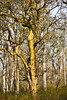 RR-P7646 (Ravi Prabhune) Tags: kabini karnataka wild wildlife water westernghats jungle life safari elephants d810 nikon80400 nature nikon80200