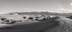 20180316_Death_Valley_006 (petamini_pix) Tags: california deathvalley desert mesquitedunes deathvalleynationalpark dune sanddune pattern shadow shape plants shrubs panorama panoramic landscape footprints blackandwhite blackwhite bw monochrome grayscale