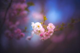 Dreamy Spring | Flickr colors