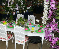 the 2018 pacific orchid exposition: theme table 2-18 (nolehace) Tags: theme table 218 flower bloom plant winter nolehace sanfrancisco fz1000 sfos poe pacificorchidexposition pacific orchid exposition 2018 goldengatepark